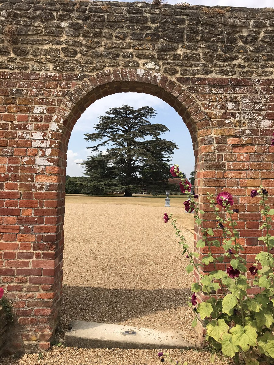 RT @HollinsMargaret Cedar and hollyhocks, @LoseleyPark