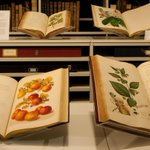 Kew's Library contains nearly 2,000 years of plant knowledge and discovery, including information on the naming, classification and uses of plants, plant ecology and conservation, and wild plants of the world. Find out more: https://t.co/gHqzHftCjY