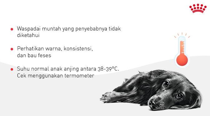 Royal Canin Id Pa Twitter Konsultasi Pada Dokter Hewan Itu Penting Pet Mates Terlepas Dari Kondisi Anak Anjing Yang Tidak Mau Makan Atau Terluka Ada 3 Hal Yang Harus Kamu Ketahui Saat