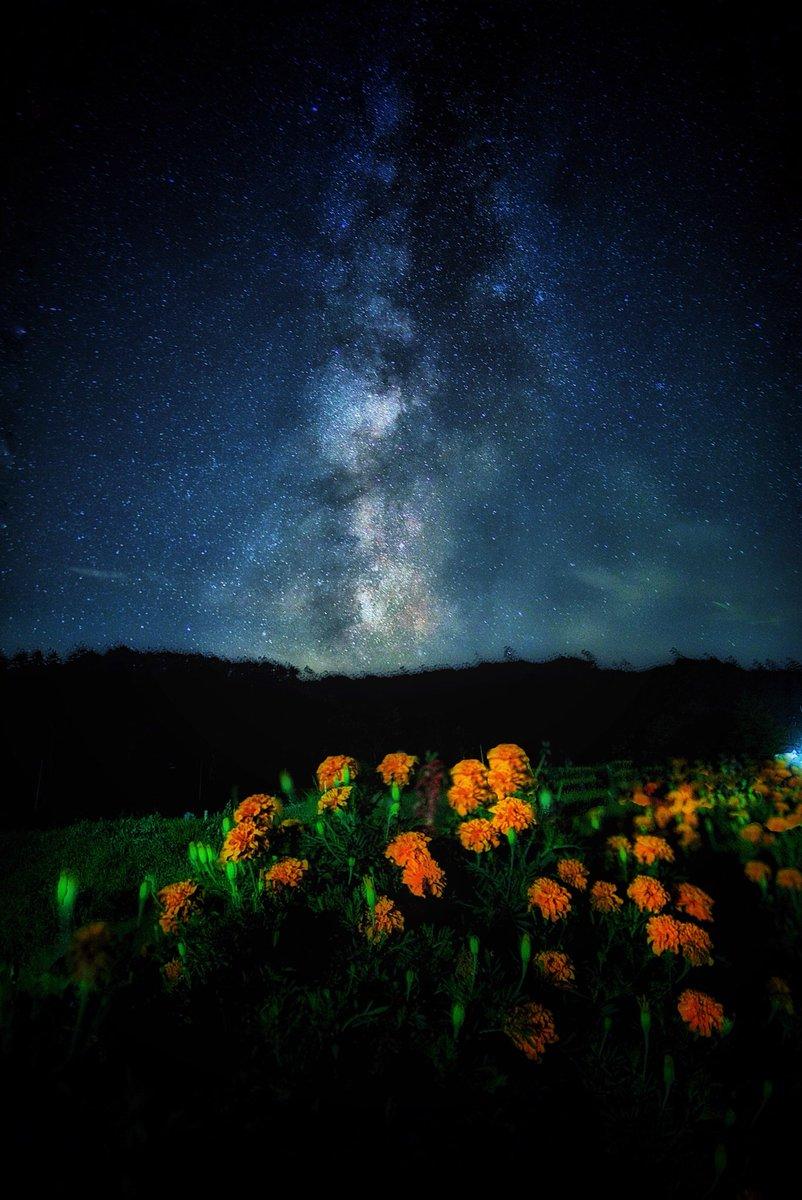 オレンジ色の花畑と天の川