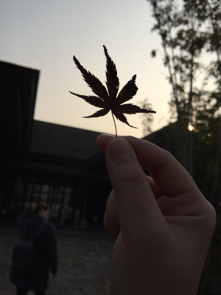 大麻 前田 敦子