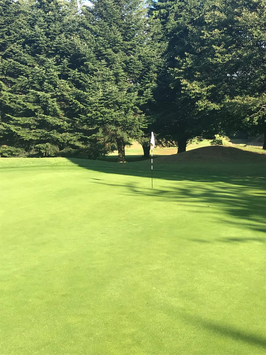 test Twitter Media - Greens looking lovely this morning . Less stress on the plant after some welcome rain . https://t.co/D4KUrzOM2h