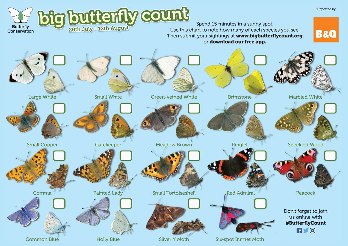 Butterfly Conservation on Twitter: