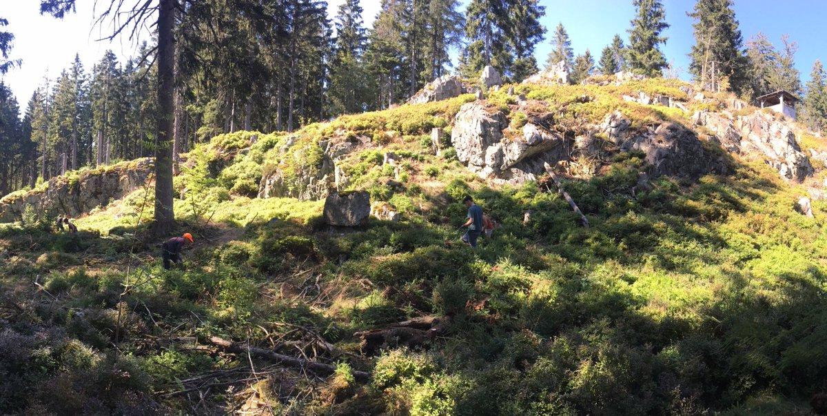 Die #Kreuzotter mag's gern sonnig. Und sonnige Felsstandorte. Diese gibt's im #Fichtelgebirge. Damit es sonnig bleibt: Bestockung auflichten, Besonnung ermöglichen. --> Aktiver #Artenschutz (auch wenn's gerade sehr sonnig ist...)