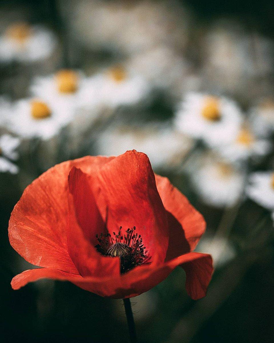 The Flower Nature Theflowernature Twitter