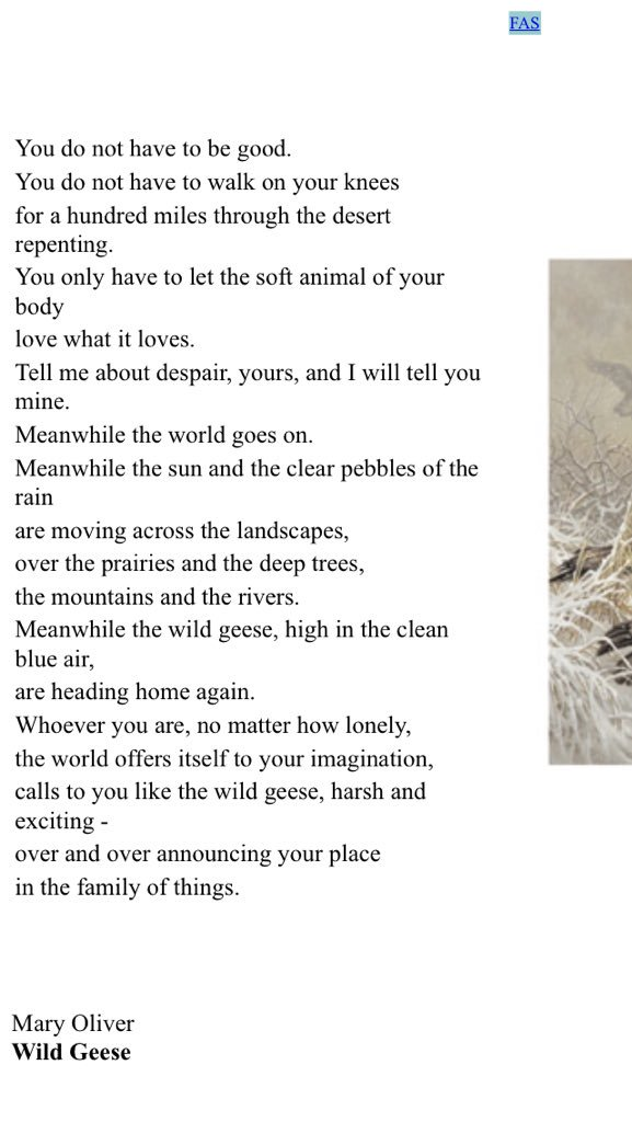 Mary Oliver Poems Wild Geese 7