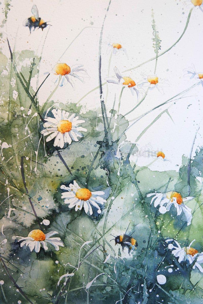 Daisies hashtag on twitter daisies hashtag on twitter izmirmasajfo
