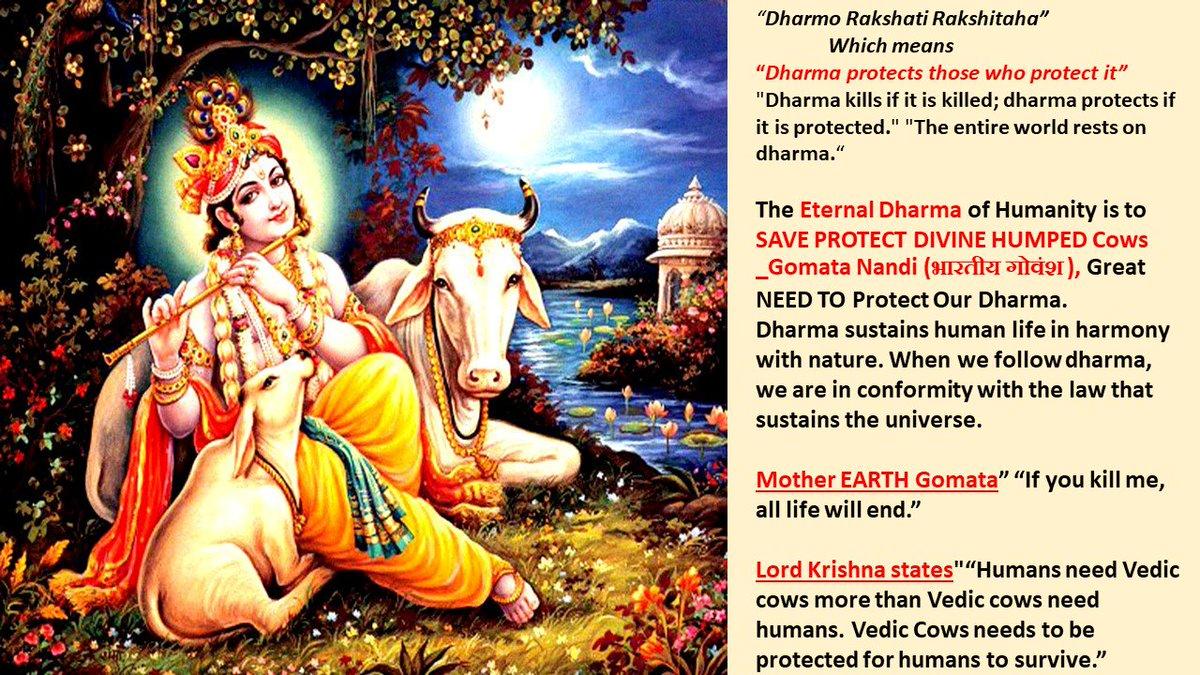 dharma_save hashtag on Twitter