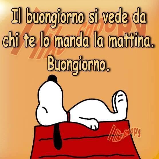 Antonella on twitter 1agosto buongiorno for Immagini divertenti buongiorno venerdi