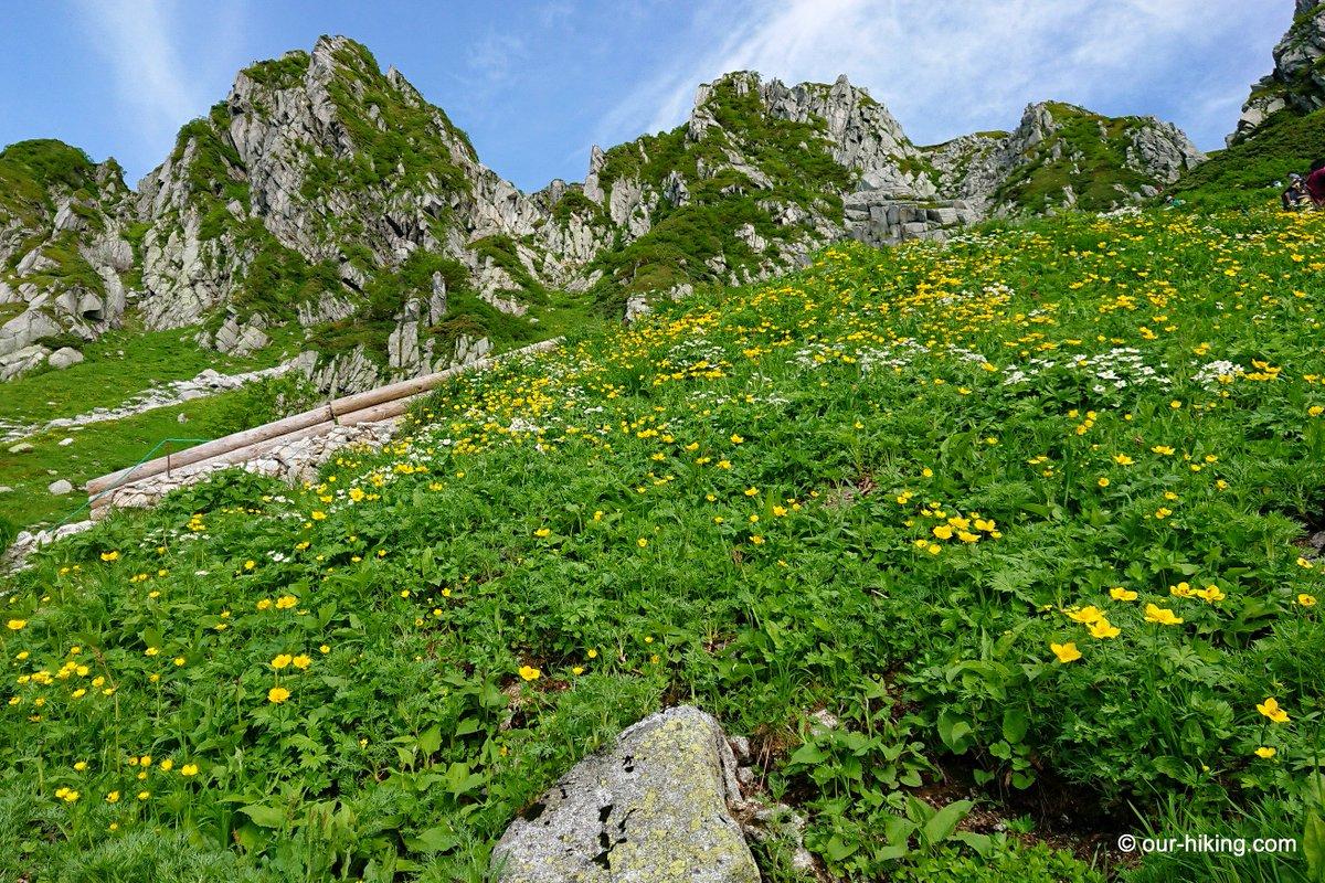7月16日、千畳敷駅から往復登山した木曽駒ヶ岳の登山記録をUPしました。 青空の深い青とシナノキンバイの群生が印象的でした。 http://www.our-hiking.com/mt.kisokoma1.html…  #木曽駒ヶ岳 #千畳敷 #宝剣岳 #中央アルプス #木曽駒ブルー #シナノキンバイ