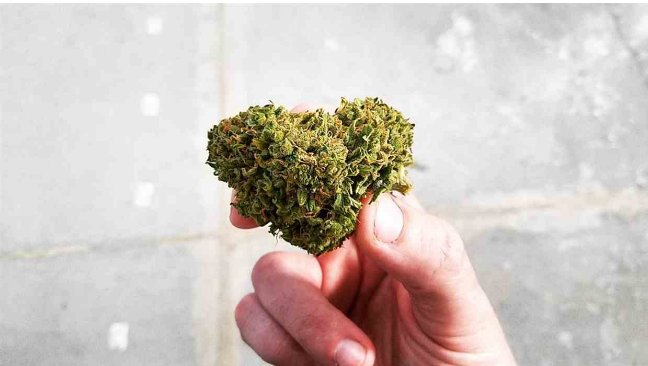 the effects of marijuana abuse as presented in the documentary half baked Here we are informed that, in 1972, the thc % was about 1% - my position is that the confiscated weed of that time was probably known as ditch weed or hemp.