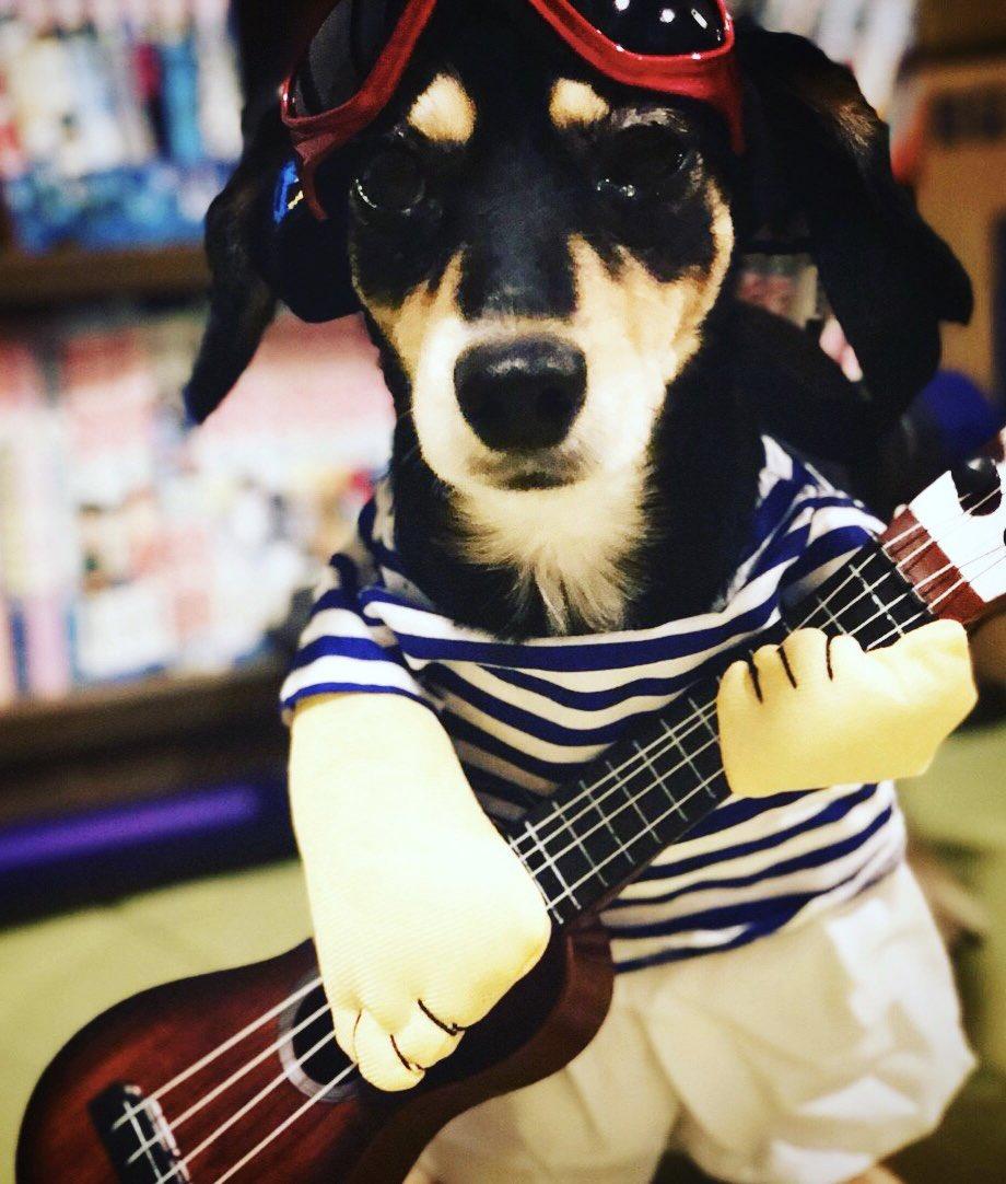 ミュージシャンという職業は…  決めたその日から誰でもなれる!  #ちわっくす #musician #dogstagram #chiwawa #duchshundpic.twitter.com/SYKlEytvTJ