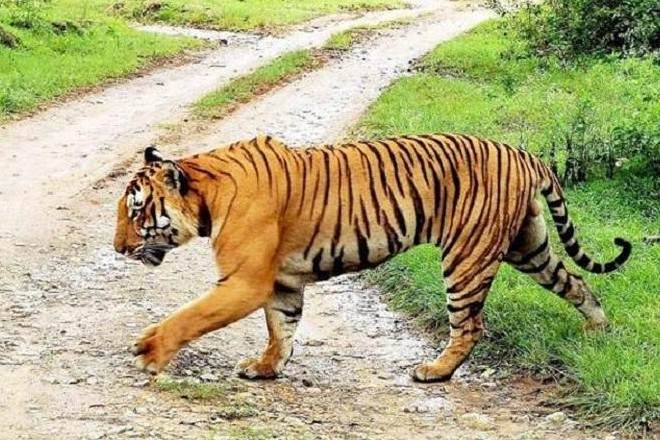 #NightTraffic at #Bandipur #Tiger reserve: Why #Centre wants #Karnataka to revoke ban  https://t.co/tsC4zfmB2w