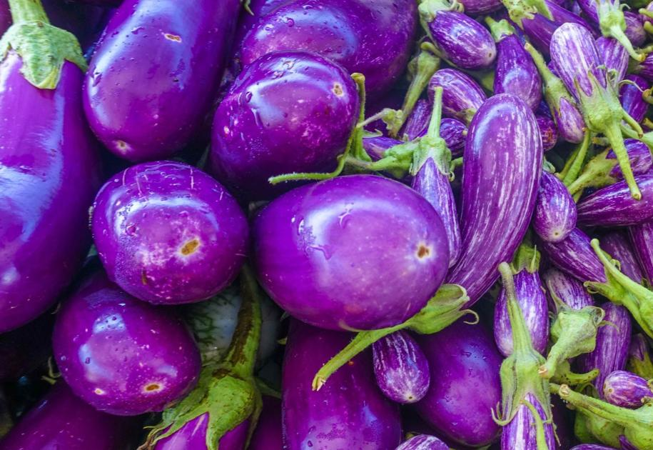 Submit your eggplant recipes; you may win cookbook https://t.co/KaM1RwsSph https://t.co/cnh4m7WTVF