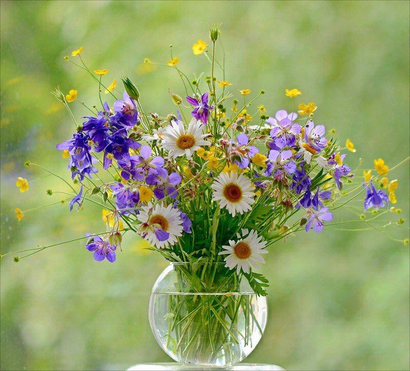 Днем, открытки с днем рождения с цветами полевыми