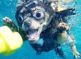 """ついでですが""""Underwater Dog""""でググると見た事もない生き物がいっぱい見れます。"""