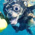 こんな生き物見たことない!水に潜る犬の顔がヤバすぎる!