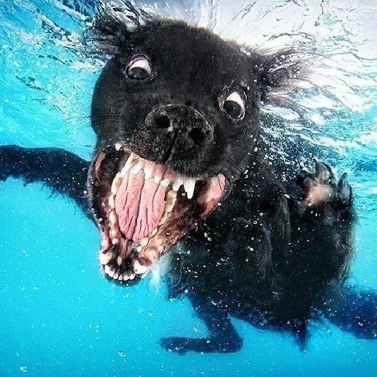 こんな生き物見たことない!水に潜る犬の顔がヤバすぎるwww