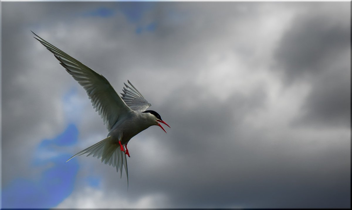 composition on my favourite bird Free essays on essay on my favourite bird in marathi get help with your writing 1 through 30.