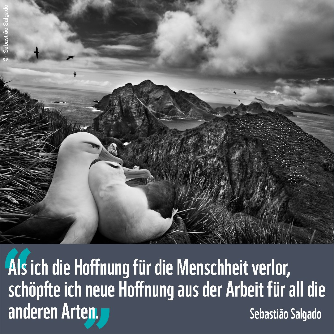 WWF Deutschland (@WWF_Deutschland) | Twitter