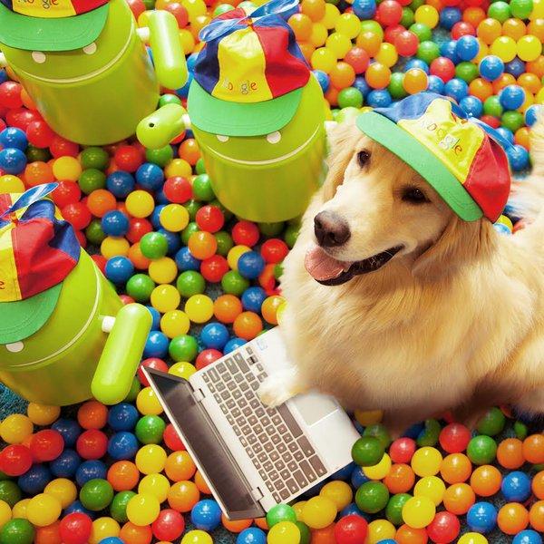 #PostYourDog On n'a pas pu résister. 🐶 #DogCompany
