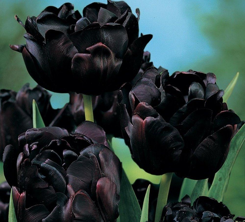 Фото картин на черном фоне смотря