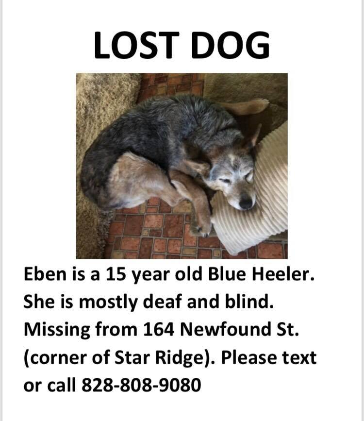 She Is Wearing A Green Collar And Walks With Her Tail Between Legs Due To Arthritis Call 828 808 9080 If You See Pic Twitter 8renfrrpcz