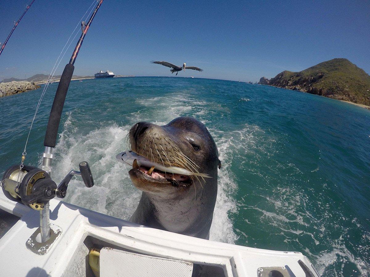 психологи картинка фото на море с юмором создании