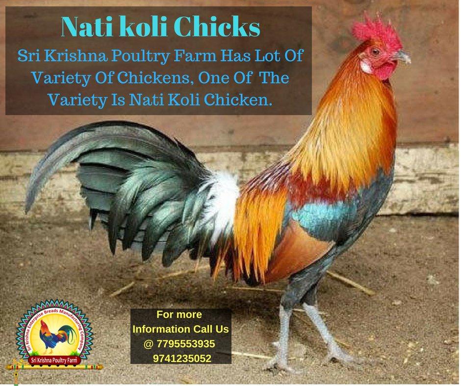 Sri Krishna Poultry Farm (@SriFarm) | توییتر
