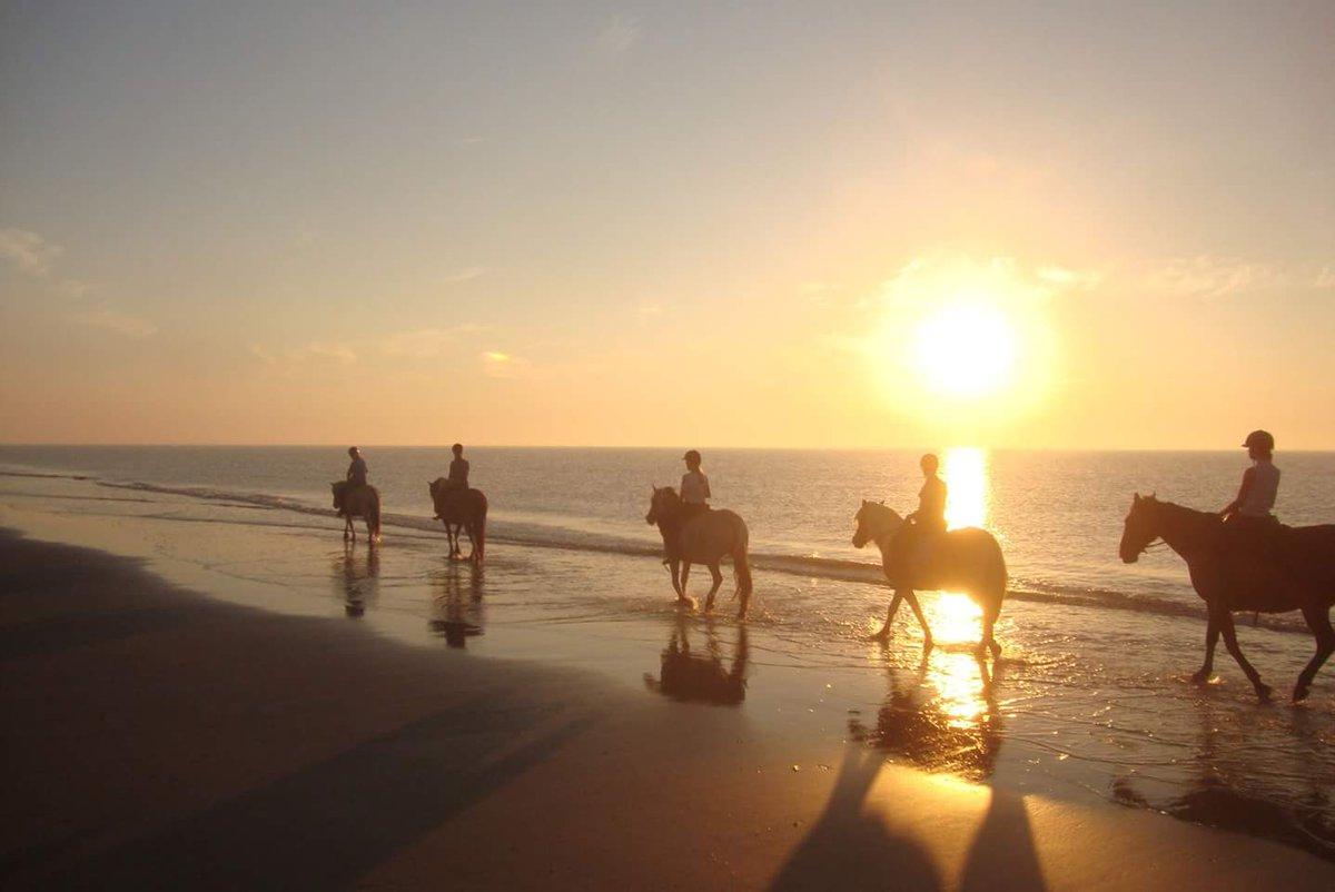 Rij je vanavond mee met onze avondrit? Deze tocht is 2,5 uur en voor  gevorderden. Meld je aan via app, SMS of bel 0623272522 #paardrijden over  het #Strand ...