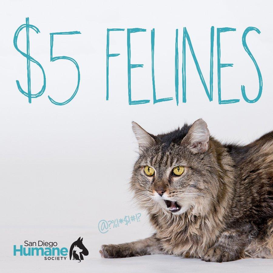 San Diego Humane Society on Twitter: