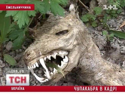 Ой краснознаменной бригады, 53, обнаружено тело летнего.