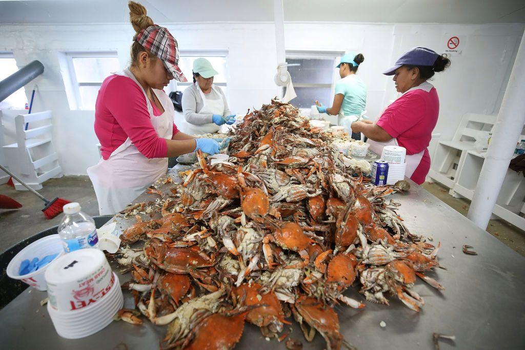 Trump's visa crackdown is hitting Maryland's crab industry hard  http:// bit.ly/2L5HPVl  &nbsp;  <br>http://pic.twitter.com/dLrBSagsZ6