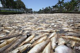 #Florida has declared a State of Emergency along the Gulf Coast. 300 tonnes of fish, dozens of dolphins, Sea Turtles and Whale Sharks have died from the record setting #RedTide. <br>http://pic.twitter.com/DQ3m5jiF3X