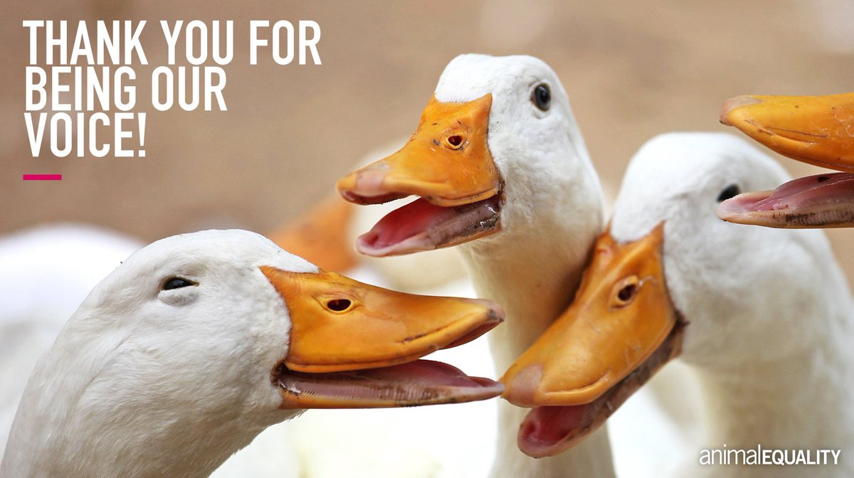 Our #FoieGrasFreeGB petition has reached the milestone of 100,000 signatures!   A huge thank you to everyone who has supported the campaign so far! <br>http://pic.twitter.com/WA5fIXnFap