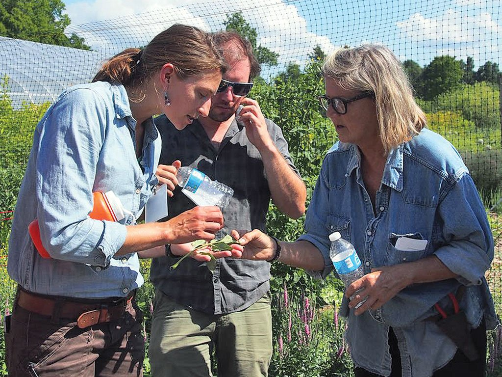 Lily Calderwood '09 is horticulture professor at the @UMaine and a blueberry specialist. Take a peek at her unique job: https://t.co/S3DhqQo4El https://t.co/UpbgfK9pxk