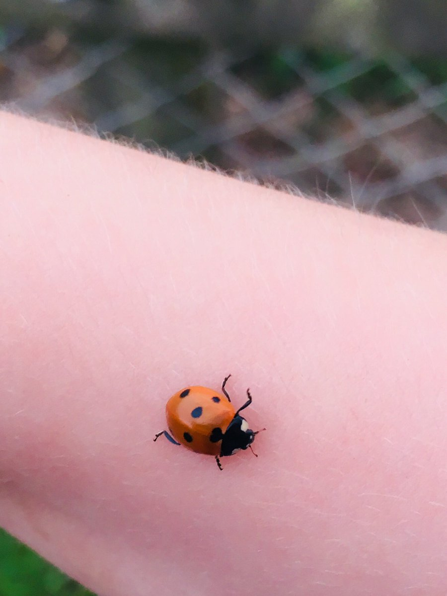 Imagine never feeling the tickle of a Ladybird clambering up your arm?   Our insect population is declining as a whole but leaving out logs for overwintering and having a small nettle patch in your garden can help tremendously.   Even small measures can have a positive impact  <br>http://pic.twitter.com/NWCeesn5oa
