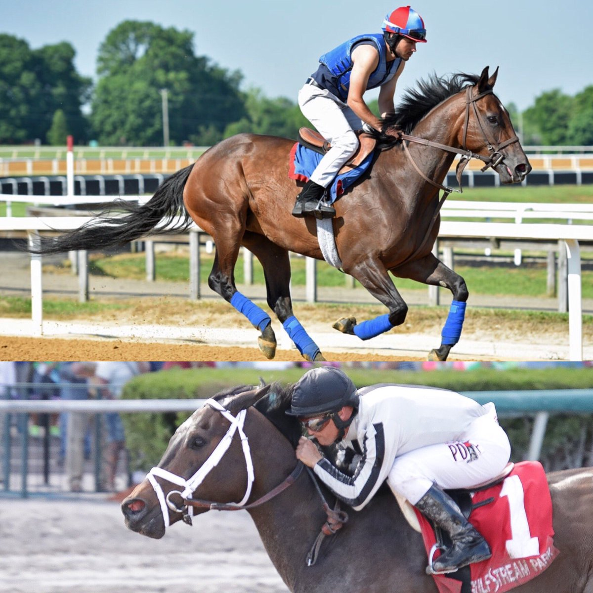 test Twitter Media - BSW Private Purchases G2W/G1P (IVY BELL) and G3P (CAIRENN) plucked out of the Mid-Atlantic both worked well this AM and head to the G1 Ballerina at Saratoga. @Chinahorseclub @uscgatsby @zkisber @ColonelKisber @GrahamMotion @jjcjockey @jose93_ortiz https://t.co/iZ3Au292tx