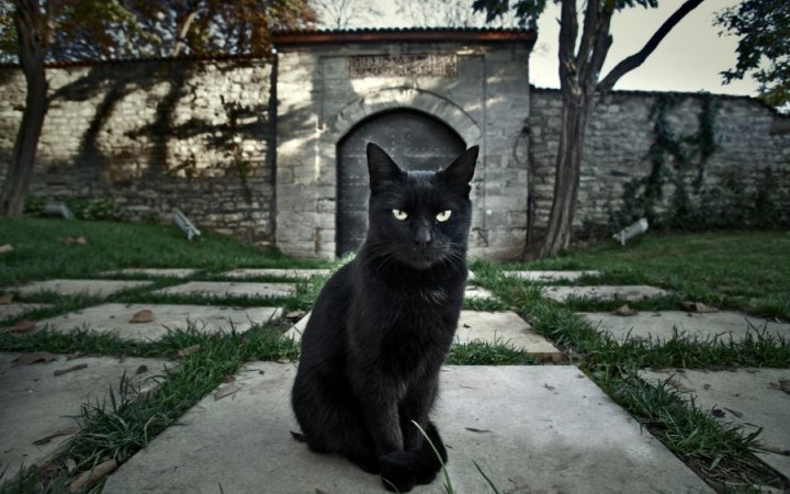In England - and apparently Japan too - black cats are sometimes considered lucky. In Scotland and Ireland, if a black cat appears at your door, it is an omen of prosperity. #BlackCatAppreciationDay #FolkloreThursday #Folklore #Gothic<br>http://pic.twitter.com/PmDPGq41qq