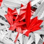 "Image for the Tweet beginning: ""Canadian Legalization Opens up Door"