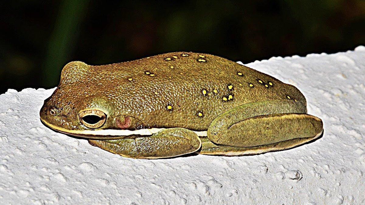 3dac4825 Happy Friday! Enjoy this incredible frog loafpic.twitter.com/X8BKyu3btM