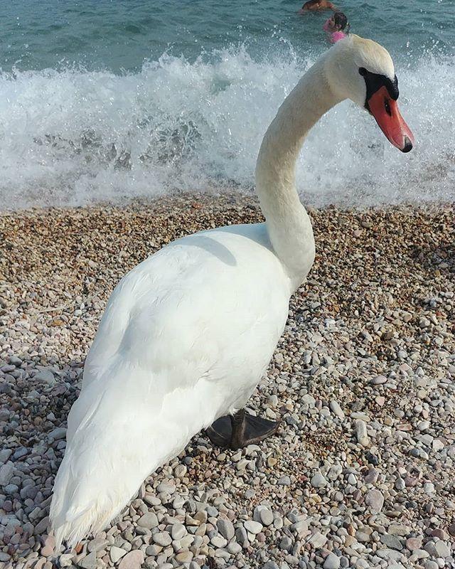 In posa... #italia #italy #italy #igers #igerslombardia #yallers #yallerslombardia #veneto #yallersveneto #igersveneto #garda #lagodigarda #lago #lake https://ift.tt/2MwJHuU  - Ukustom