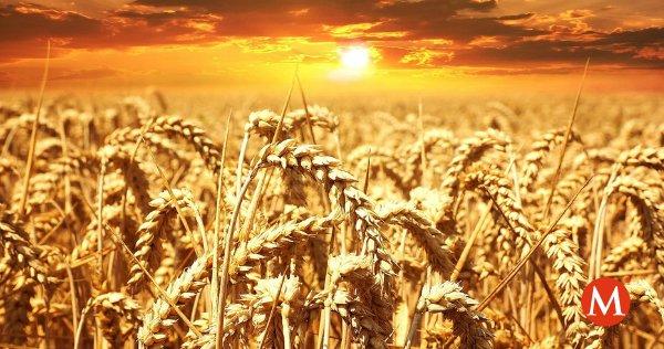 El #clima ya no será problema, descubren cómo mejorar cultivos de trigo https://t.co/EofhgL4vic https://t.co/j5njsZviEh