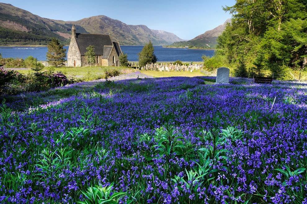 A field of beautiful Blue Bells  Ballachulish, Scotland <br>http://pic.twitter.com/AyDeStwxRW
