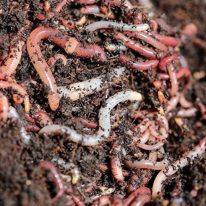 #DYK there are more living organisms in a tablespoon of soil than there are people on ! #biodiversity #soils<br>http://pic.twitter.com/qHjUKV7A7F