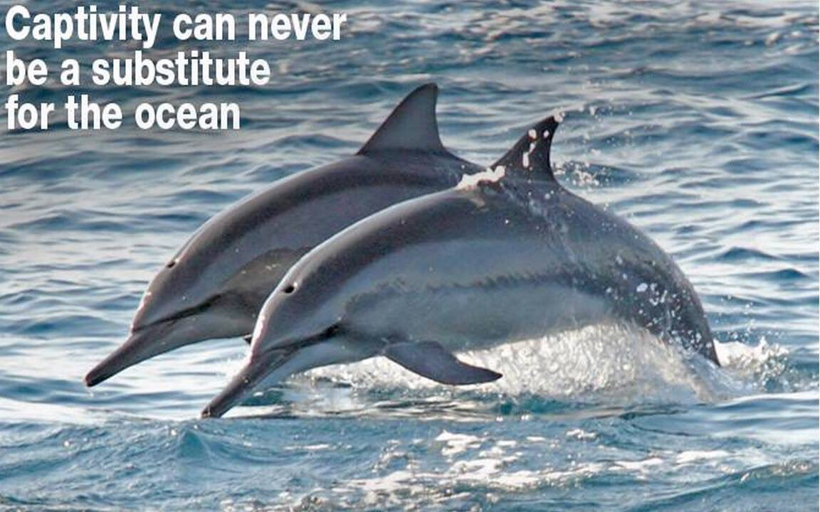 Captivity can never be a substitute for the ocean. #EmptyTheTanks #CaptivityIsCruel #dontbuyaticket #TheCove<br>http://pic.twitter.com/vxoRqAbXKD