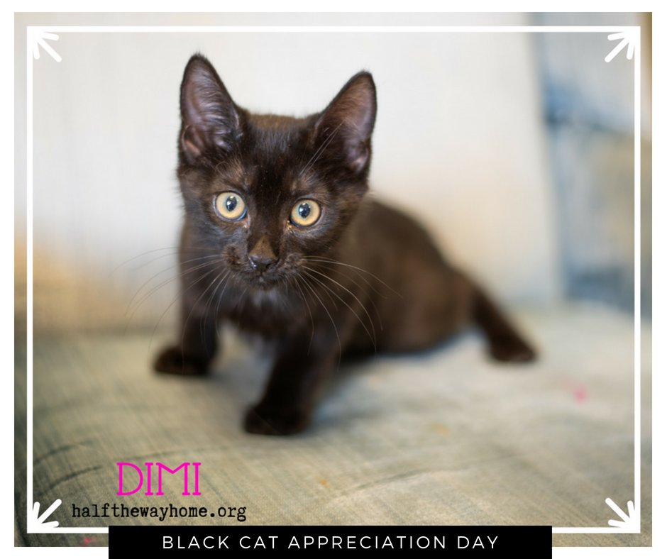 #BlackCatAppreciationDay MEOW is the time to fall in love. Adopt cats like Dimi and Beatrix today!   http:// halfthewayhome.org  &nbsp;     #love #fav #cute #cat #RT #news #CatsOfTwitter #FridayFeeling #friyay <br>http://pic.twitter.com/oDS70TgViA