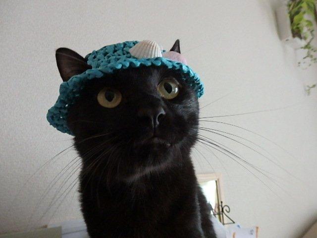test ツイッターメディア - 夏の思い出帽子 アクアブルーの帽子に貝殻をあしらいました。 貝殻も #ダイソー です。 1、2枚目カフェ、3枚目モカです。 #猫の帽子 #黒猫 #猫好きさんと繋がりたい https://t.co/yIA1vI0mrh