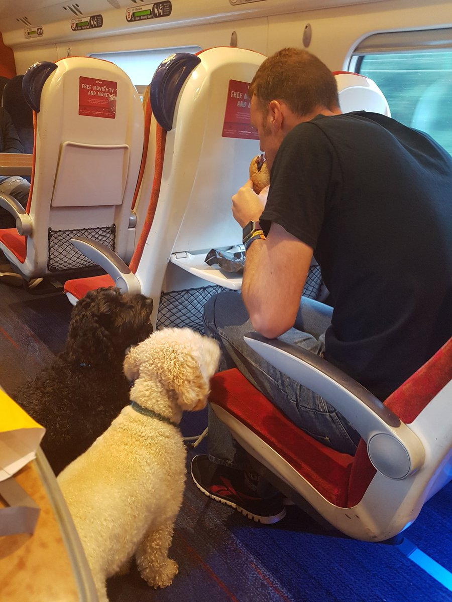 Dogs looking on enviously as daddy eats his @wcornwallpasty big breakfast as we travel on @VirginTrains Devon bound!<br>http://pic.twitter.com/R5KYGrFXrJ