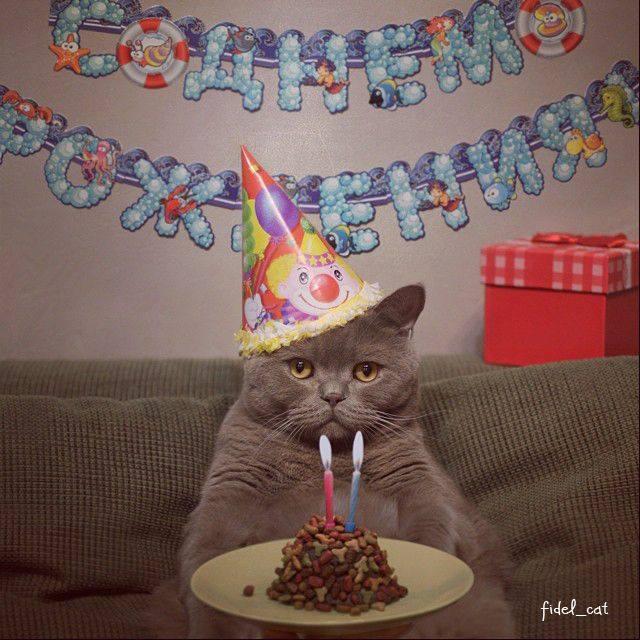 Кот для поздравления с днем рождения, дню рождения года